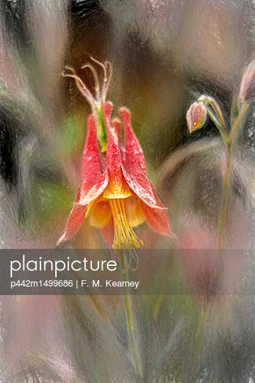 p442m1499686 von F. M. Kearney