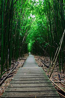 Bambou forest - p7050110 by Florian Tröscher