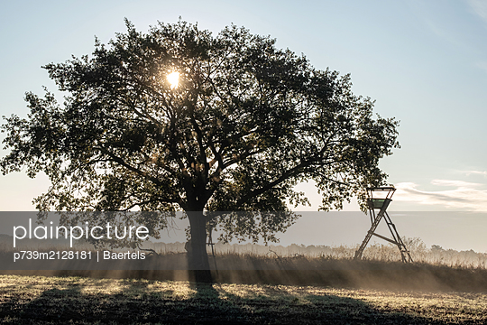 Single tree against morning fog - p739m2128181 by Baertels