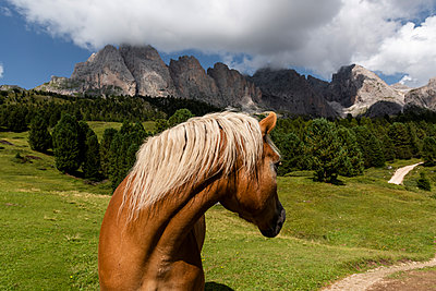 Horse looking back, Dolomites, South Tyrol, Italy, Europe - p1062m2199750 by Viviana Falcomer