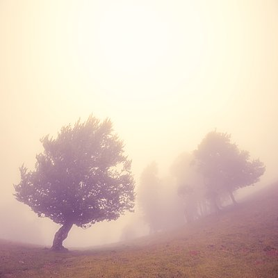 Trees in the fog - p1137m2257880 by Yann Grancher
