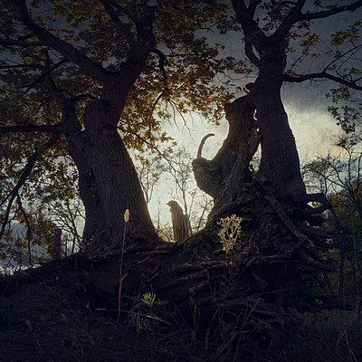 Dying Daylight - p1633m2211116 by Bernd Webler