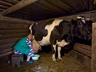 Milking a cow - p3900170 by Frank Herfort