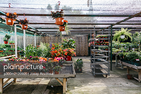 Worker in a garden center pushing a cart with plants - p300m2120905 by Josep Rovirosa