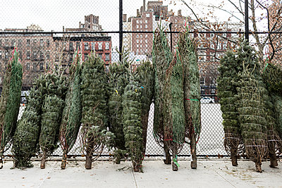 Weihnachtsbäume zum Verkauf - p1094m2057276 von Patrick Strattner