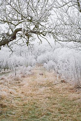 Winterwald - p2686968 von Christof Mattes