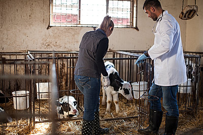 Vet and female farmer looking at calf on farm - p300m1191782 by zerocreatives