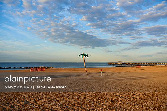 Plastic palm tree on Coney Island beach at sunrise; New York City, New York, United States of America - p442m2091679 by Daniel Alexander