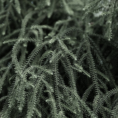 Foliage plant, close-up - p1624m2223736 by Gabriela Torres Ruiz