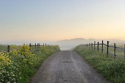 Dirt track through landscape - p575m714896 by Stefan Ortenblad