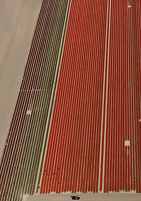 Distant view of crops in agricultural field, Hohenheim, Stuttgart, Baden-Wuerttemberg, Germany - p301m1406251 by Stephan Zirwes