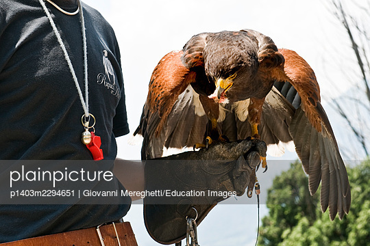 Falconers - p1403m2294651 by Giovanni Mereghetti/Education Images