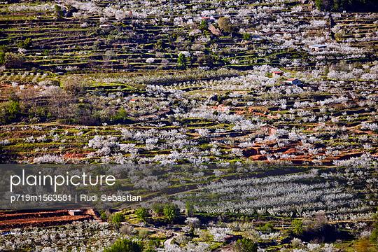 Cherry blossom in Jerte valley - p719m1563581 by Rudi Sebastian