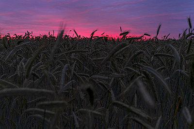 Sonnenuntergang - p1338m2196191 von Birgit Kaulfuss