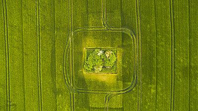 Bäume auf einem Feld Luftaufnahme - p179m1475493 von Roland Schneider
