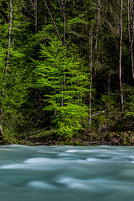 Bregenz Forest - p248m1028095 by BY