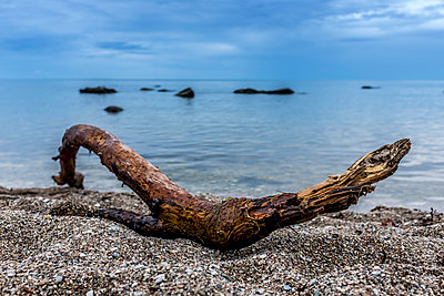 Driftwood on the beach - p393m1115428 by Manuel Krug