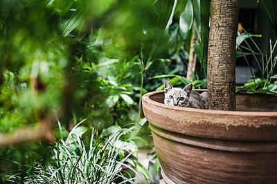 Cat in flowerpot - p728m2219753 by Peter Nitsch