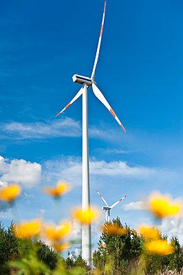 Flowers against wind turbine - p1079m1042134 by Ulrich Mertens