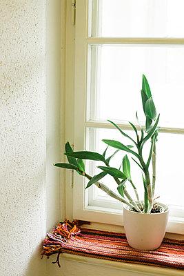 Zimmerpflanze - p798m894042 von Florian Loebermann