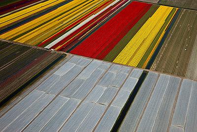 Flowerfields red yellow - p1120m948336 by Siebe Swart