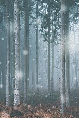 Wald im Schneefall - p401m1216940 von Frank Baquet
