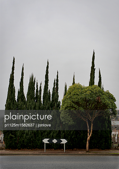 Verkehrsschild und Bäume - p1125m1582637 von jonlove