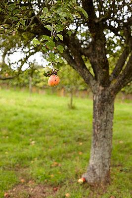 Apfelbaum - p1145m954981 von Kerstin Lakeberg