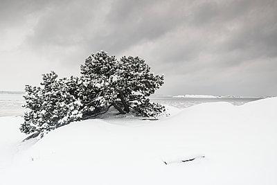 p312m2050230 von Mikael Svensson
