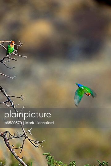 Acacia - p6520579 by Mark Hannaford