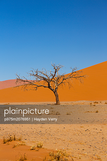 Dead tree, Sossusvlei - p975m2076951 by Hayden Verry