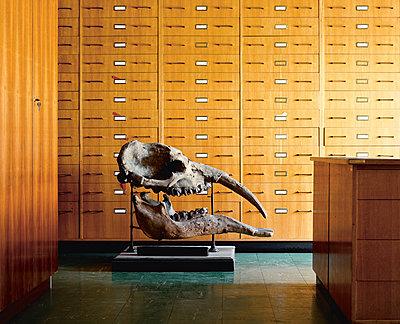 Naturhistorisches Museum - p1205m1065974 von Klaus Pichler