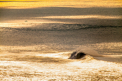 Huge wave on golden colored ocean - p343m1475709 by Sean Davey