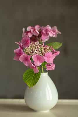 Rosafarbene Hortensienblüte in kleiner weißer Porzellanvase vor grauem Hintergrund. - p948m2134940 von Sibylle Pietrek