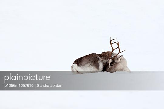 Troms - p1256m1057810 by Sandra Jordan