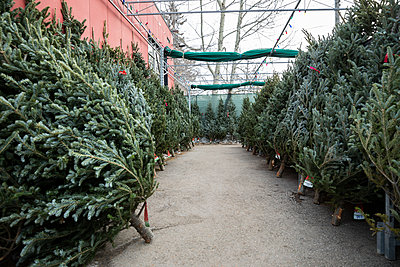 Christmas trees on display at Christmas market - p1192m2066639 by Hero Images