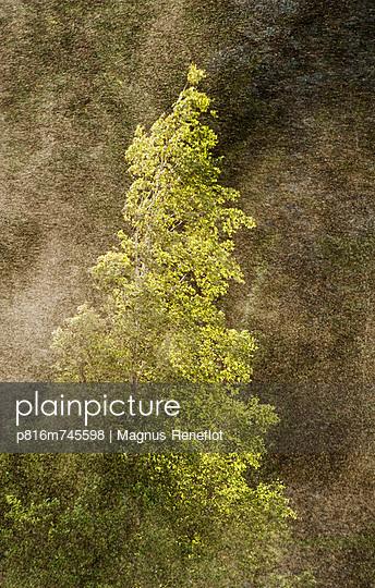 p816m745598 von Magnus Reneflot
