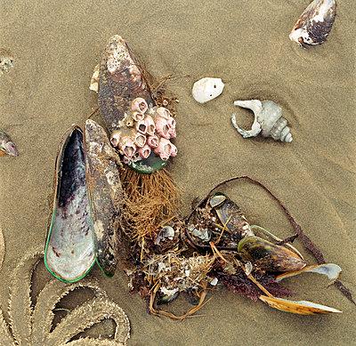 Mussels - p1016m755514 by Jochen Knobloch