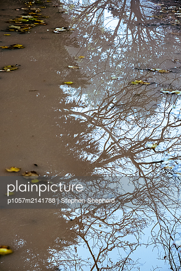 Looking down at the reflection of a leafless tree in a large puddle on the forest floor. - p1057m2141788 by Stephen Shepherd