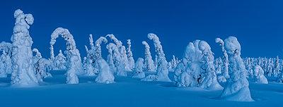 Verschneite Landschaft - p1241m2100350 von Topi Ylä-Mononen