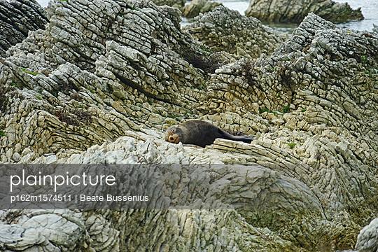 Seerobbe an der Küste des Pazifischen Ozeans in Kaikoura - p162m1574511 von Beate Bussenius