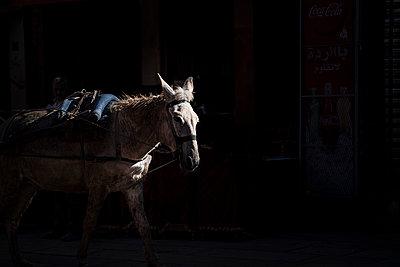 Weißes Pferd kommt aus dem Schatten  - p1007m2092412 von Tilby Vattard