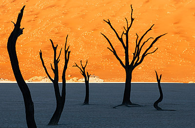 Deadvlei - p1065m885976 by KNSY Bande