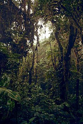Monteverde Cloud Forest, Costa Rica - p1439m1508040 von Saskia Uppenkamp