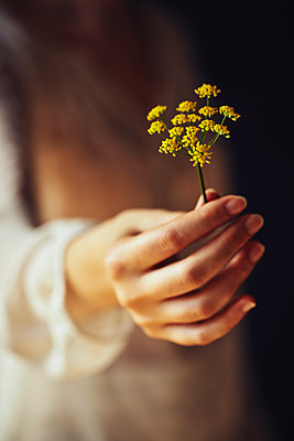 Woman holding wild flower - p968m2020231 by roberto pastrovicchio