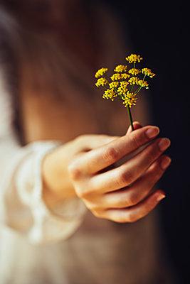 Frau hält eine Wildblume - p968m2020231 von roberto pastrovicchio