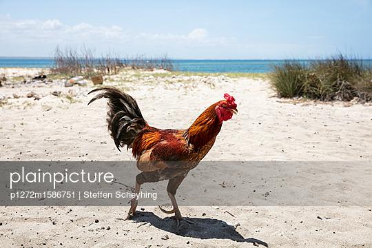 Hahn am Strand - p1272m1586751 von Steffen Scheyhing