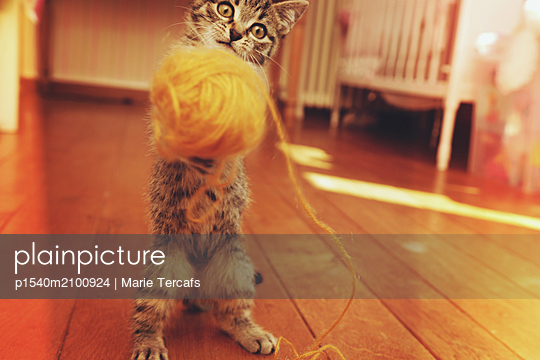 Tabby kitten playing with a ball of yarn - p1540m2100924 by Marie Tercafs