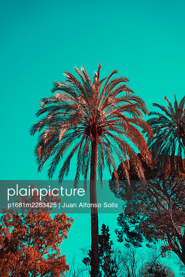 Palm trees and trees - p1681m2283425 by Juan Alfonso Solis