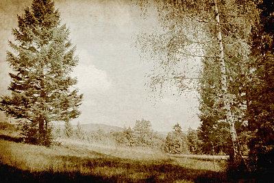 Wald - p4500476 von Hanka Steidle